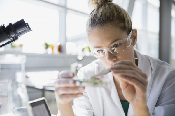 Focused scientist using tweezers in petri dish